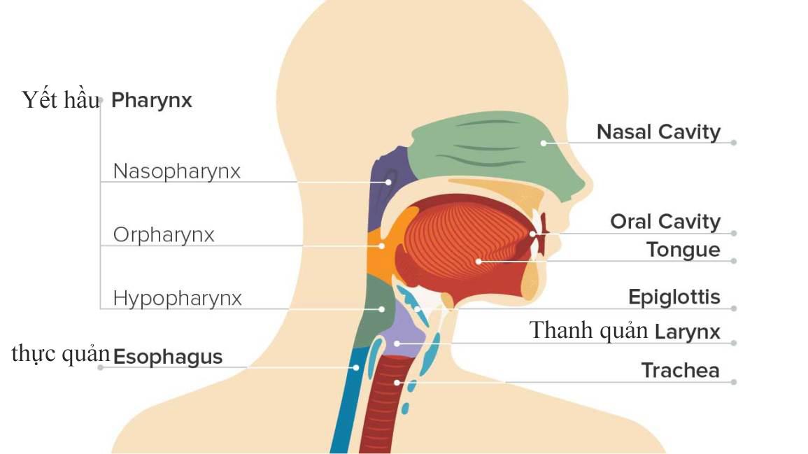 Ung thư vòm họng là gì?