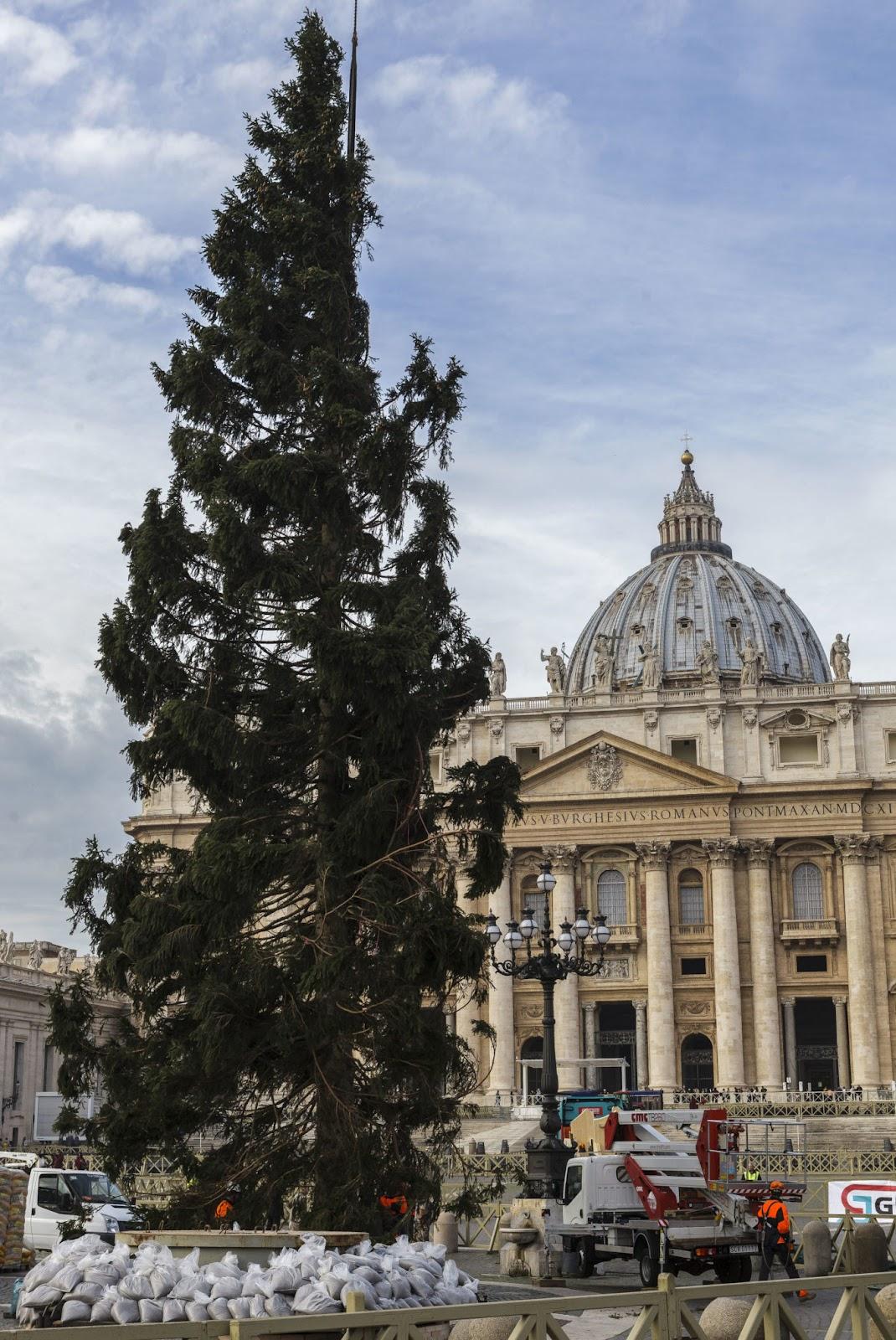 Cây thông Giáng sinh ở Quảng trường Vatican
