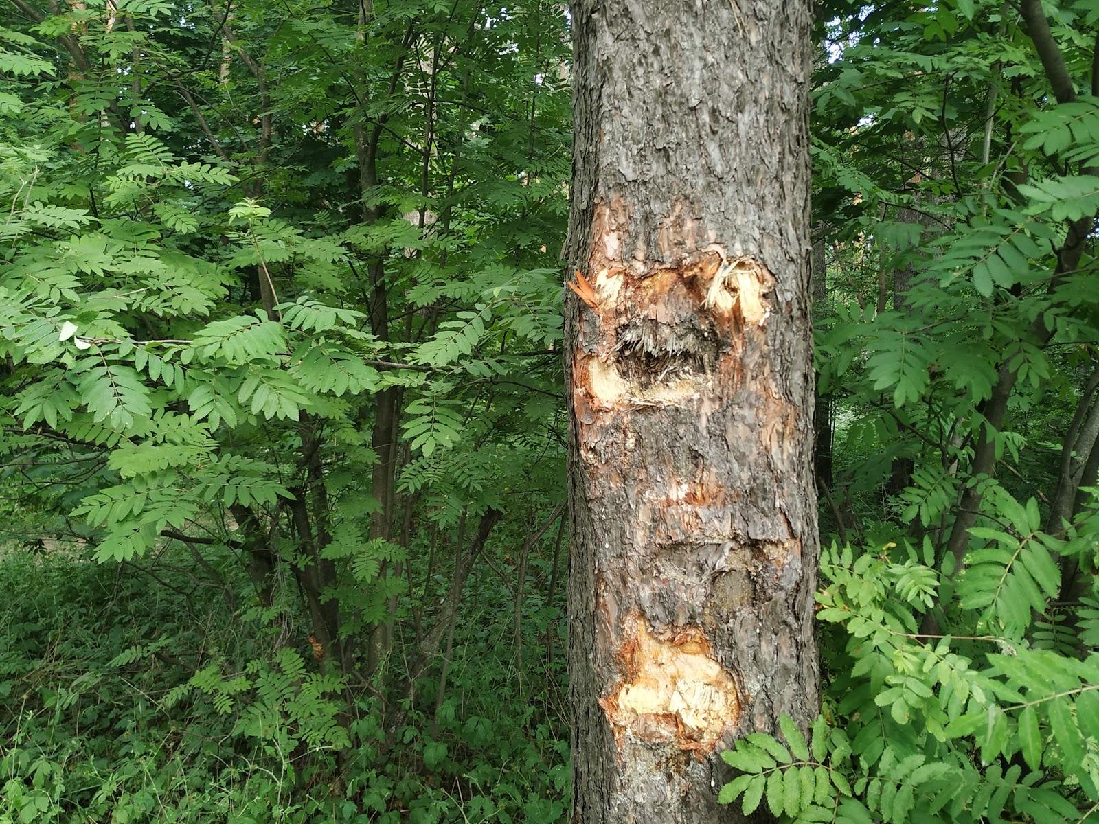 Возможно, это изображение (1 человек, пестрая неясыть, дерево и природа)