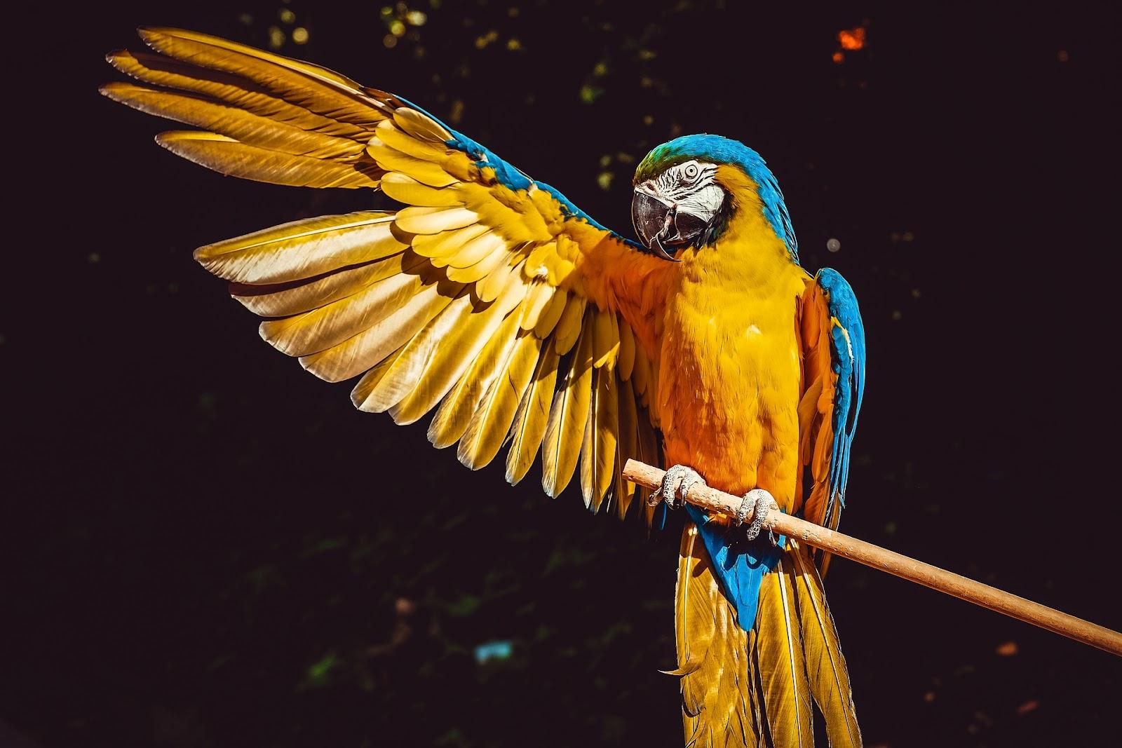 A parrot cannot get dog fleas, but it can get bird fleas.