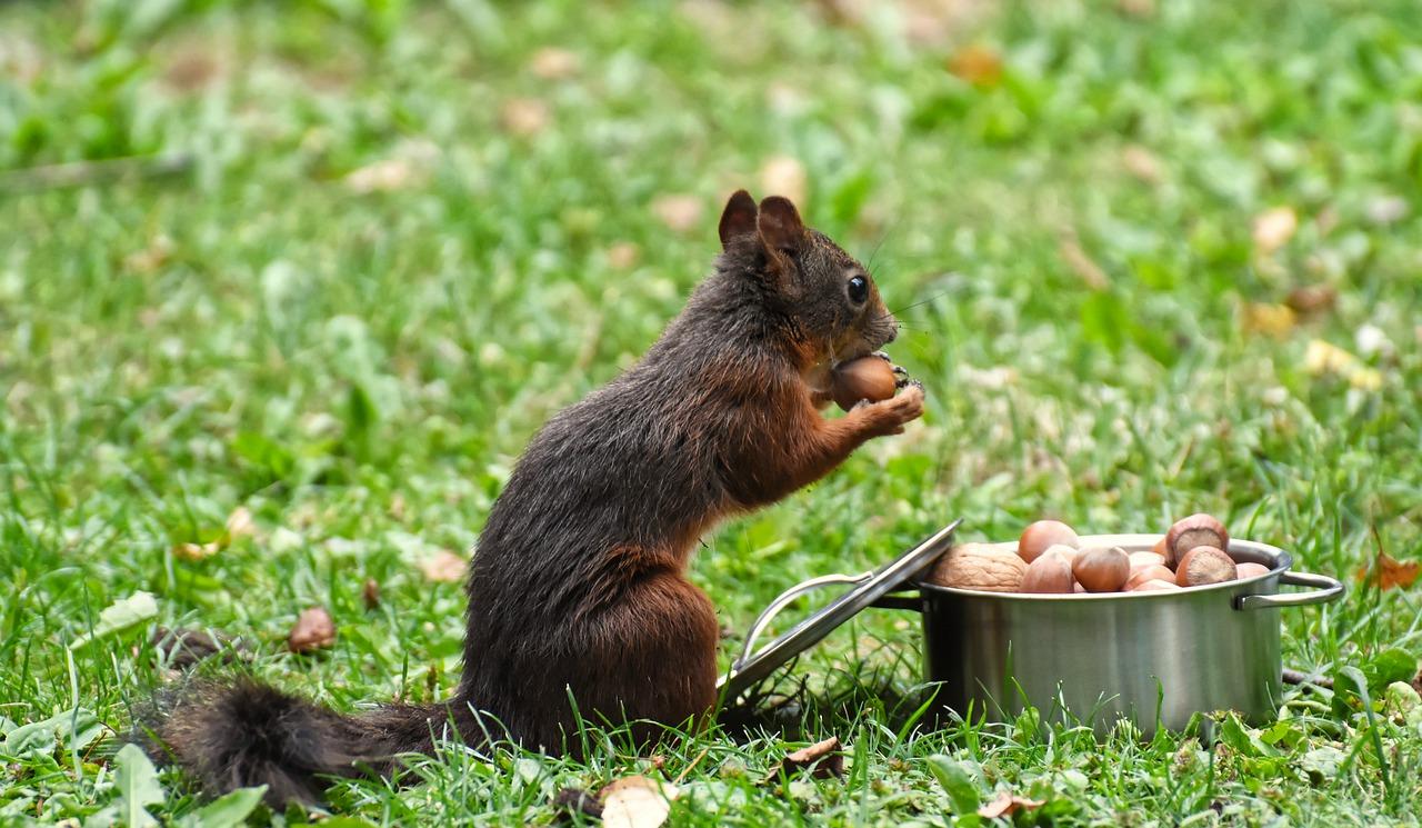 orav ja sarapuupähkel