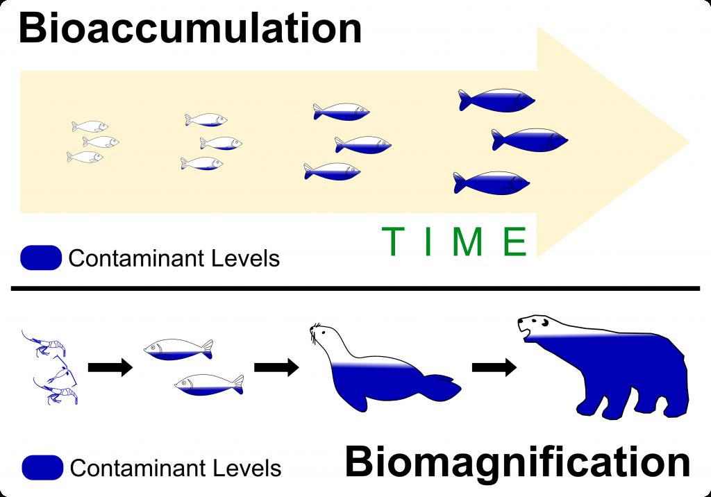 Bioaccumulation vs Bioconcentration vs Biomagnification + ...