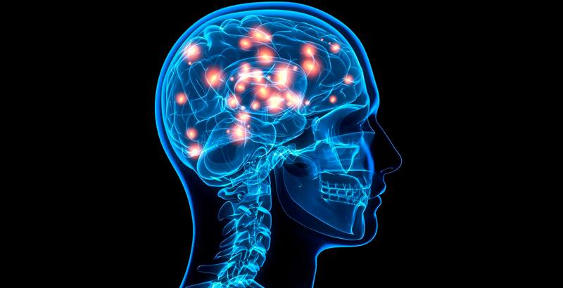 Las neuronas de un adulto se regeneran? - National Geographic en Español