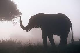 A elephant that is standing in the grass  Description automatically generated