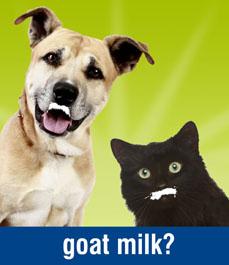 The Big Buzz Behind Raw Goat S Milk