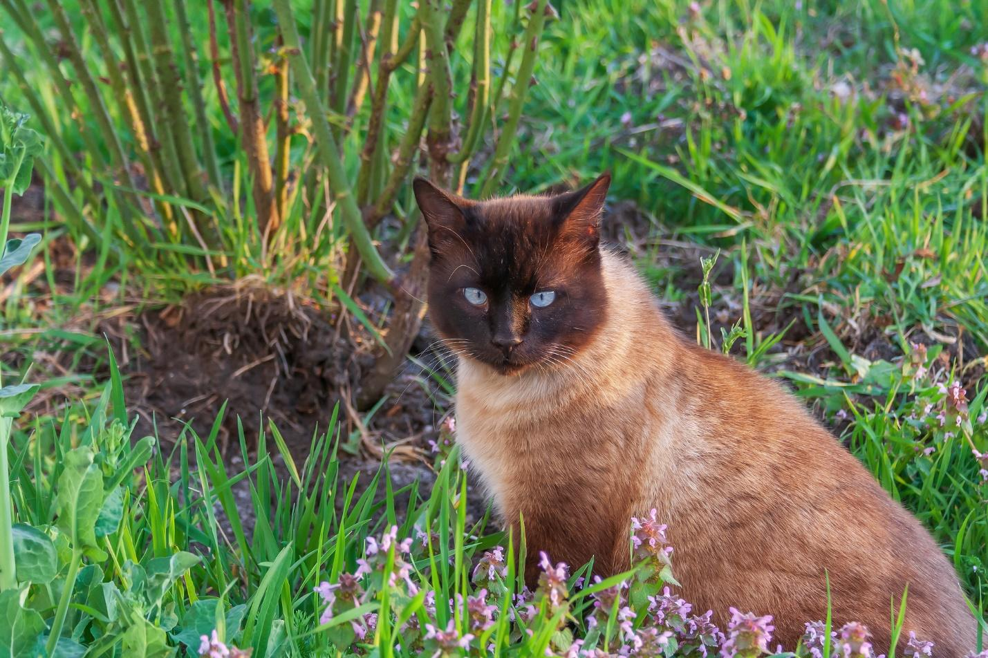 A cat sitting in the grass Description automatically generated