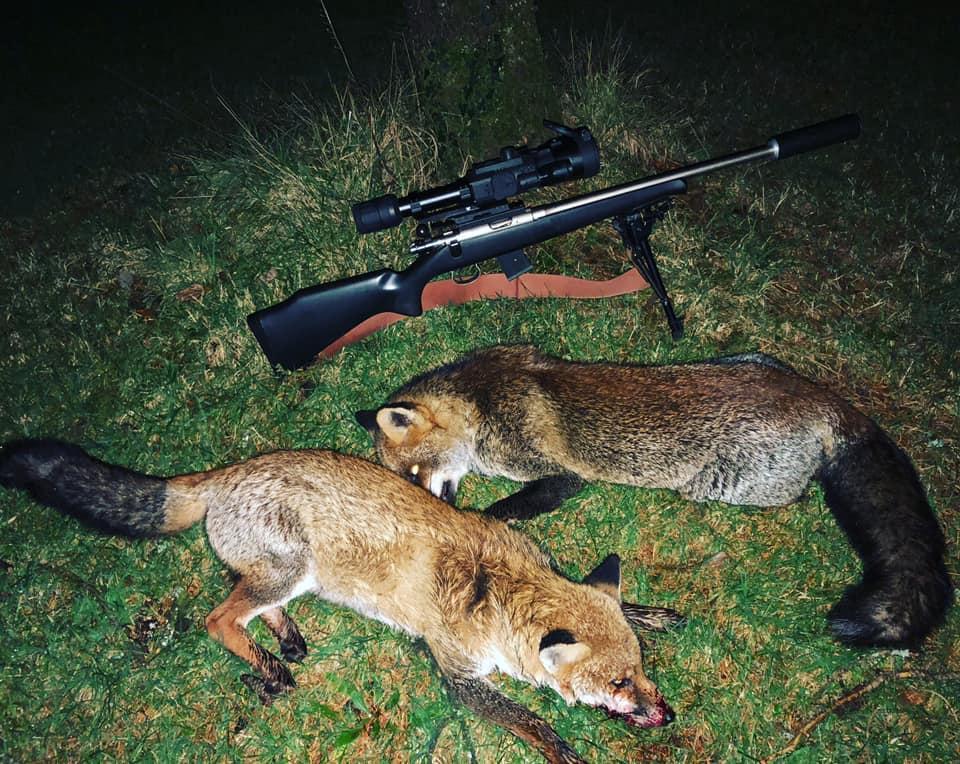 a fox and a firearm