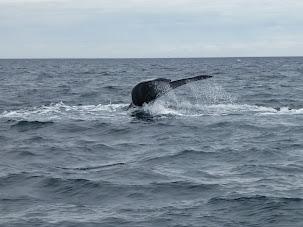Patagonia. Península de Valdés y Ushuaia, o el viaje de las ballenas al fin del mundo (Argentina)