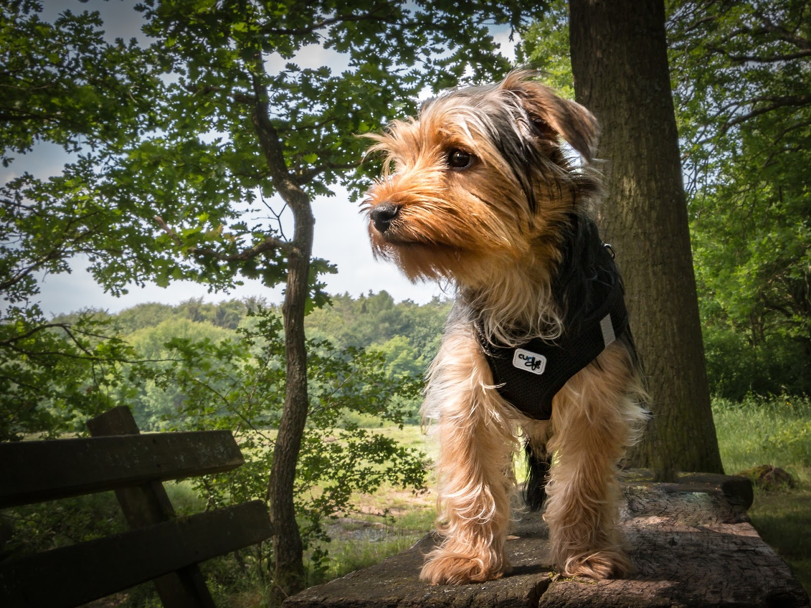 cute, healthy dog with pet health insurance sitting on bench