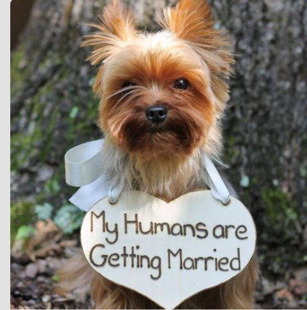 dogs at weddings .jpg
