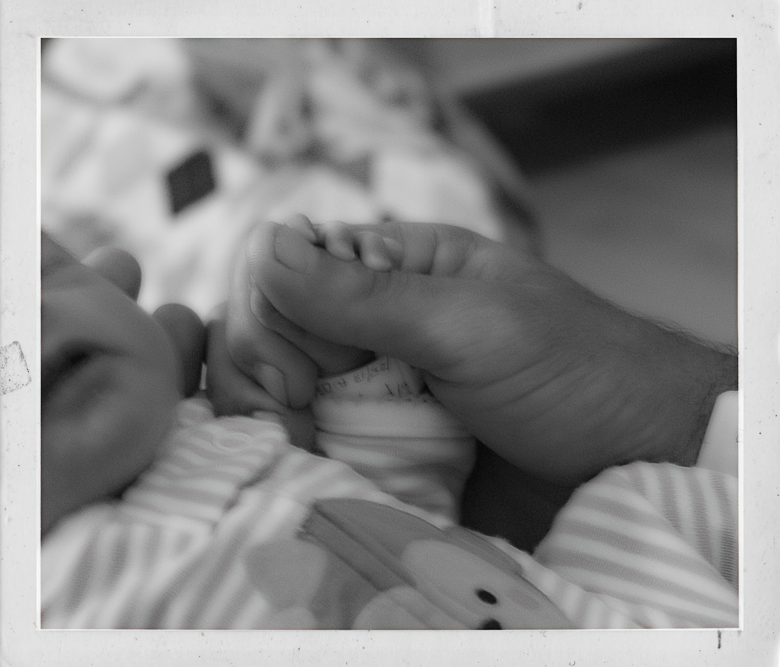 the new babies 527_pe.jpg