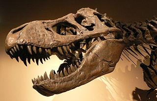 https://upload.wikimedia.org/wikipedia/commons/thumb/a/ab/Palais_de_la_Decouverte_Tyrannosaurus_rex_p1050042.jpg/320px-Palais_de_la_Decouverte_Tyrannosaurus_rex_p1050042.jpg