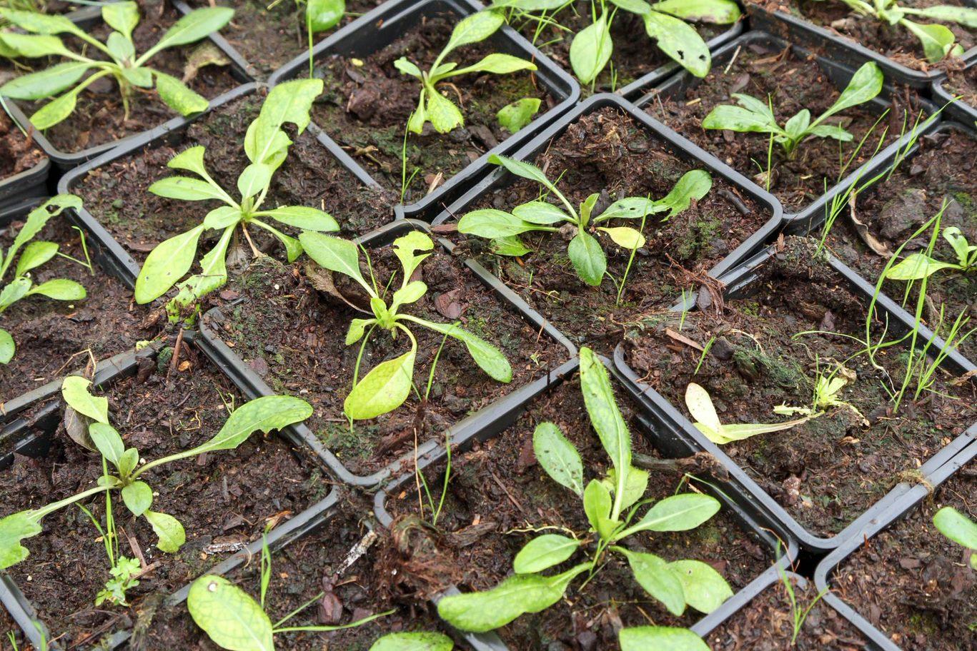 Afbeelding met gras, buiten, groente, stof  Automatisch gegenereerde beschrijving