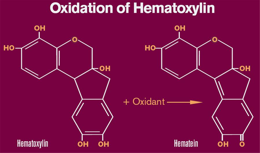 Oxidation of Hematoxylin tohematin