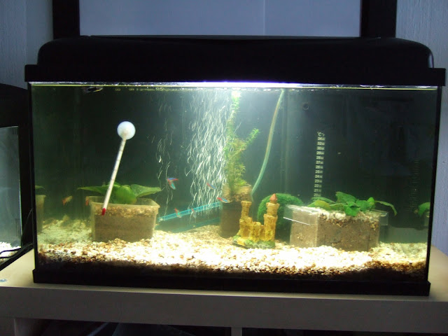Mes aquariums, leur histoire et leur évolution... 60L et 25L Aqua60-1