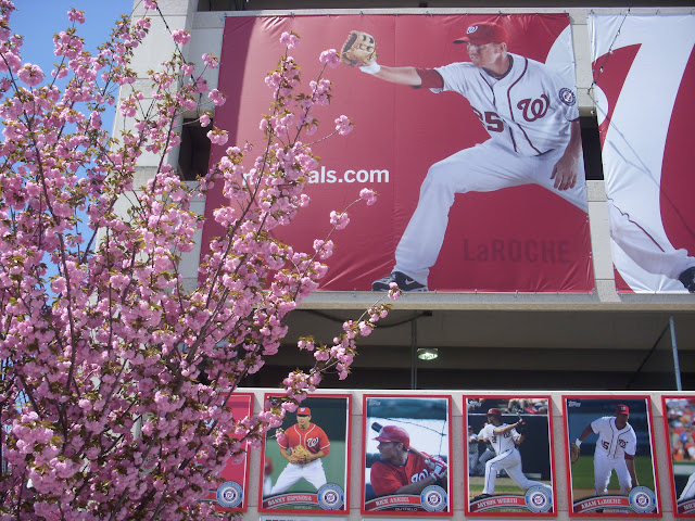 LaRoche and cherry blossoms