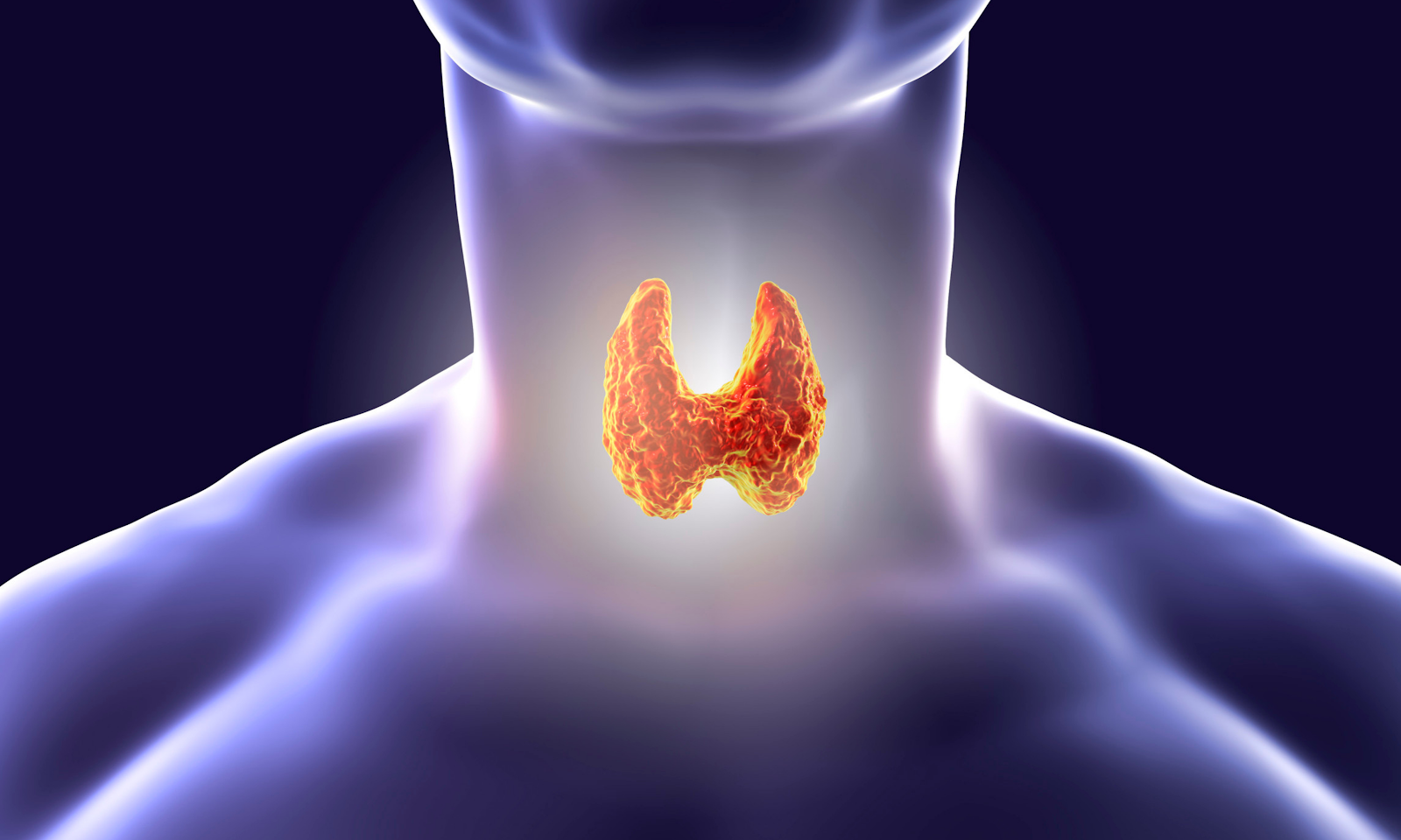 Animated image of a thyroid for indicating the importance for maintaining permanent weight loss