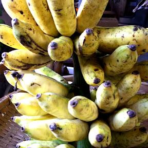 トカラ島バナナ(三尺バナナ)