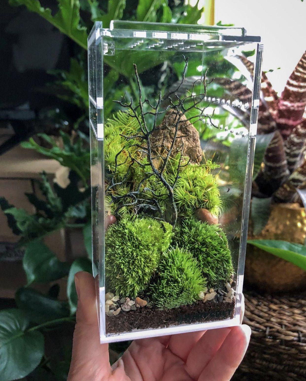 self-sustaining terrarium ecosystem