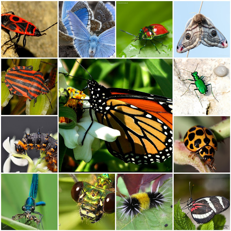 Insect Photo Mosaic