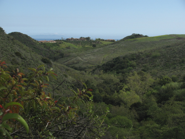 view from the canyon to the sea via a piece of Malibu