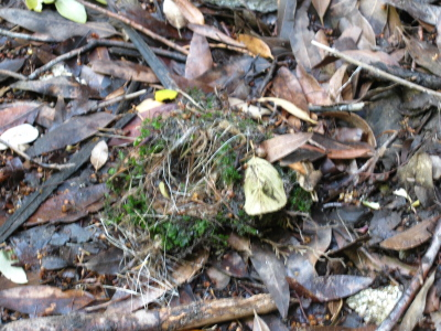 bird's nest on the ground