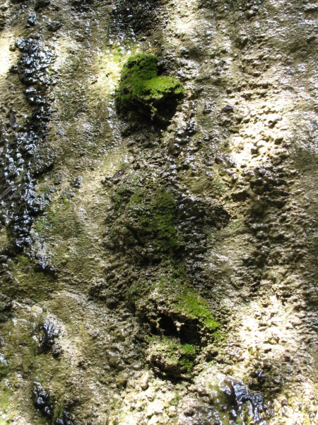 rounded bits of moss and rock where water drips