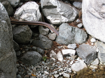 a small rail sticking out from the rocks and bent