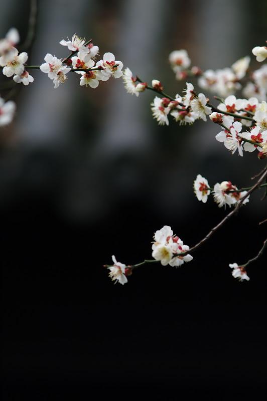 豫園~上海~櫻花...