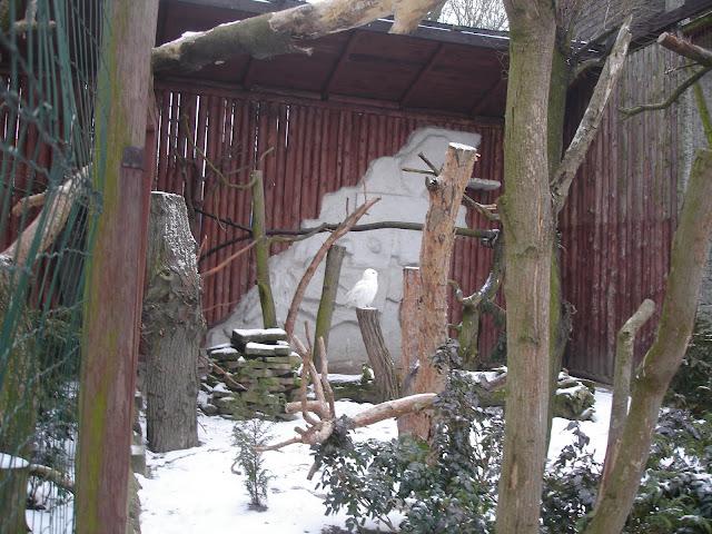 Woliera sowy śnieżnej