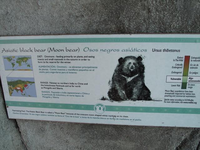 Tablica przy niedźwiedziach himalajskich