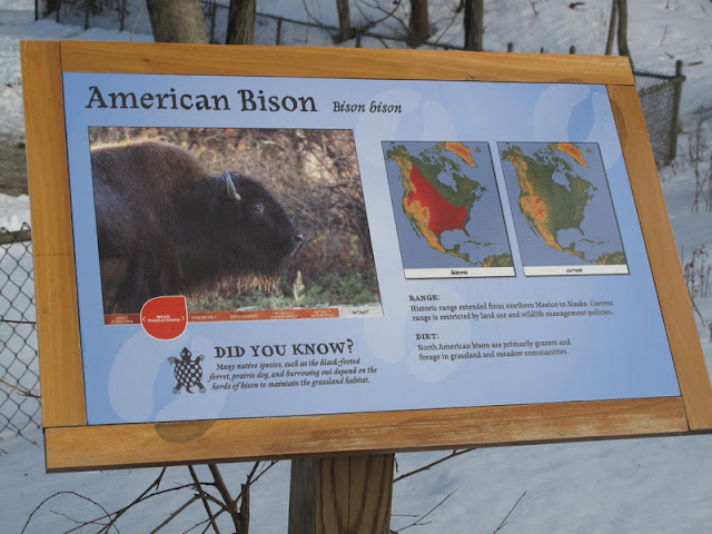 Bizon amerykański - tabliczka