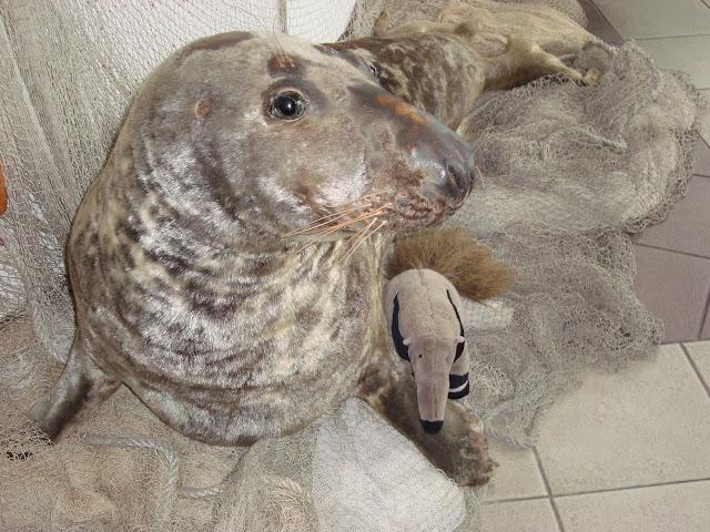 Mrówkojad i foka - podobieństwo do prawdziwych zwierząt nieprzypadkowe...