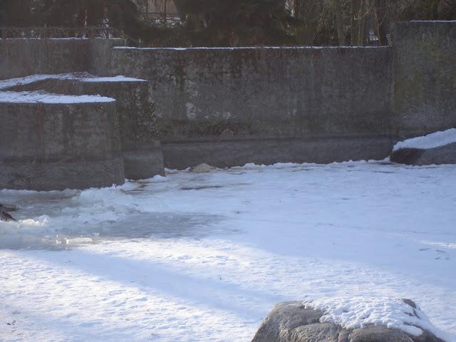 Młoda foka