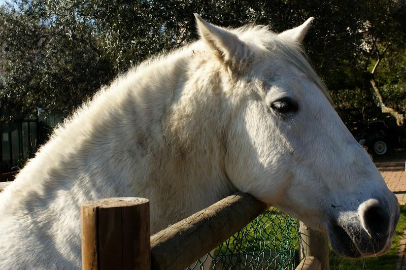 O Cavalo, quinta pedagógica dos Olivais