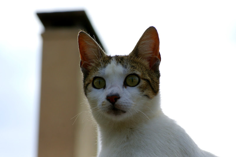 Gato em Setúbal