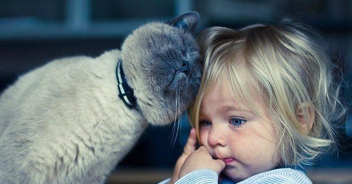 Британская кошка и ребеок