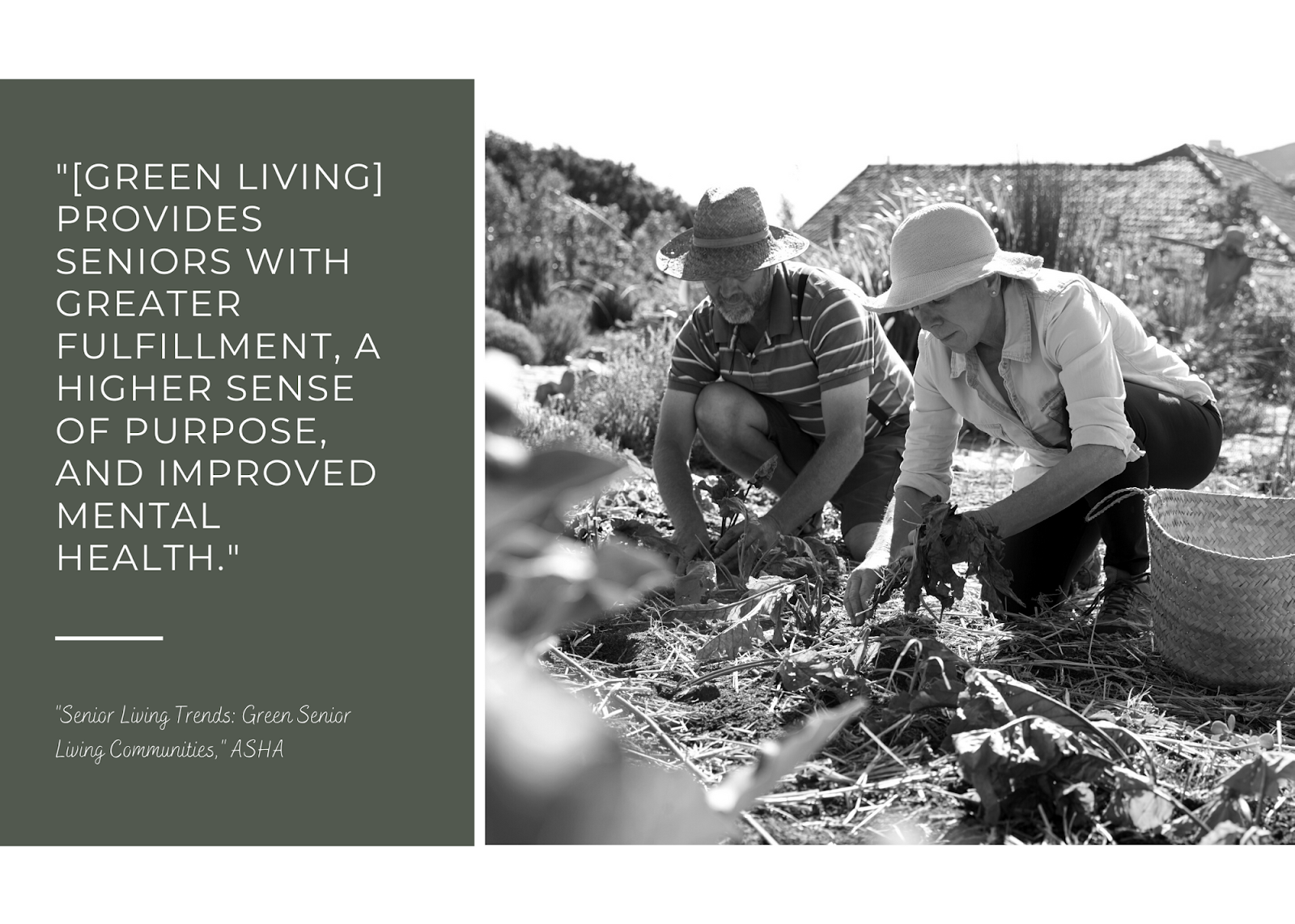 green living provides seniors with a sustainable future and alternatives for sustainable living