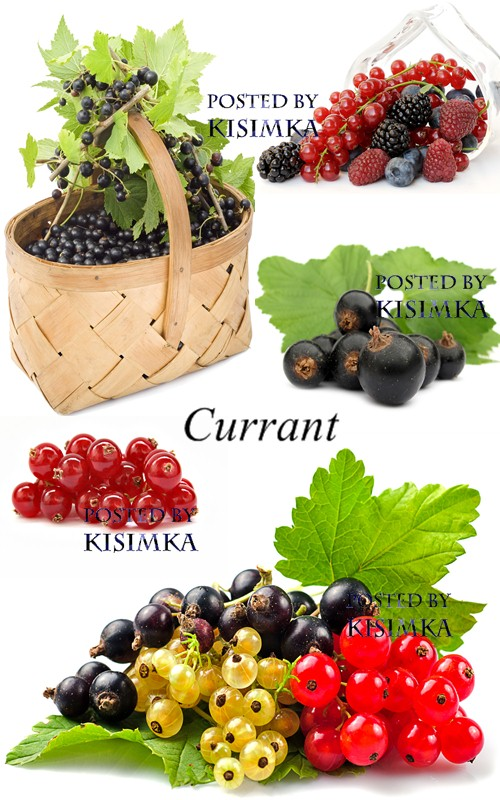 Stock Photo: Currant
