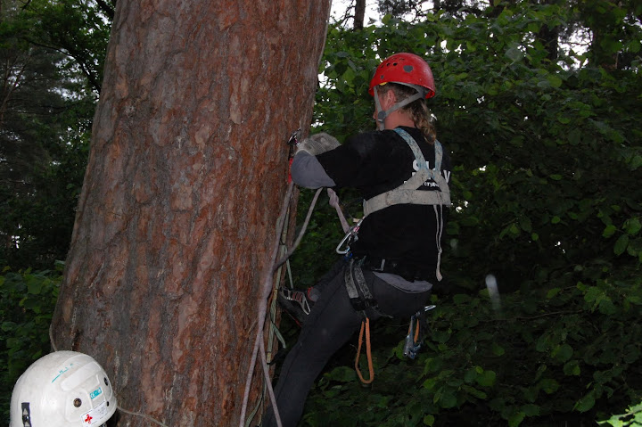пилка деревьев