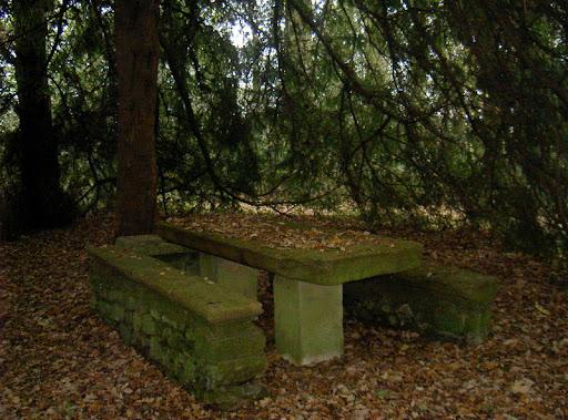 Ganador Betty -  Titulo : La mesa de piedra en el bosque centenario