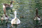 Foto del Lago de Anna
