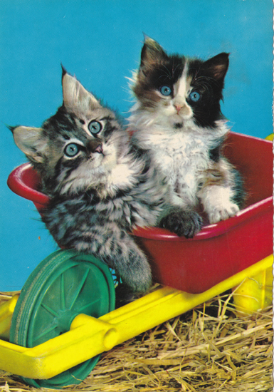 Cartes Postales Pop et Kitsch des années 50, 70 et 70 - Pop and kitsch vintage postcards from the fifties, the sixties and the seventies : Quinze chats, un chien et quelques jouets