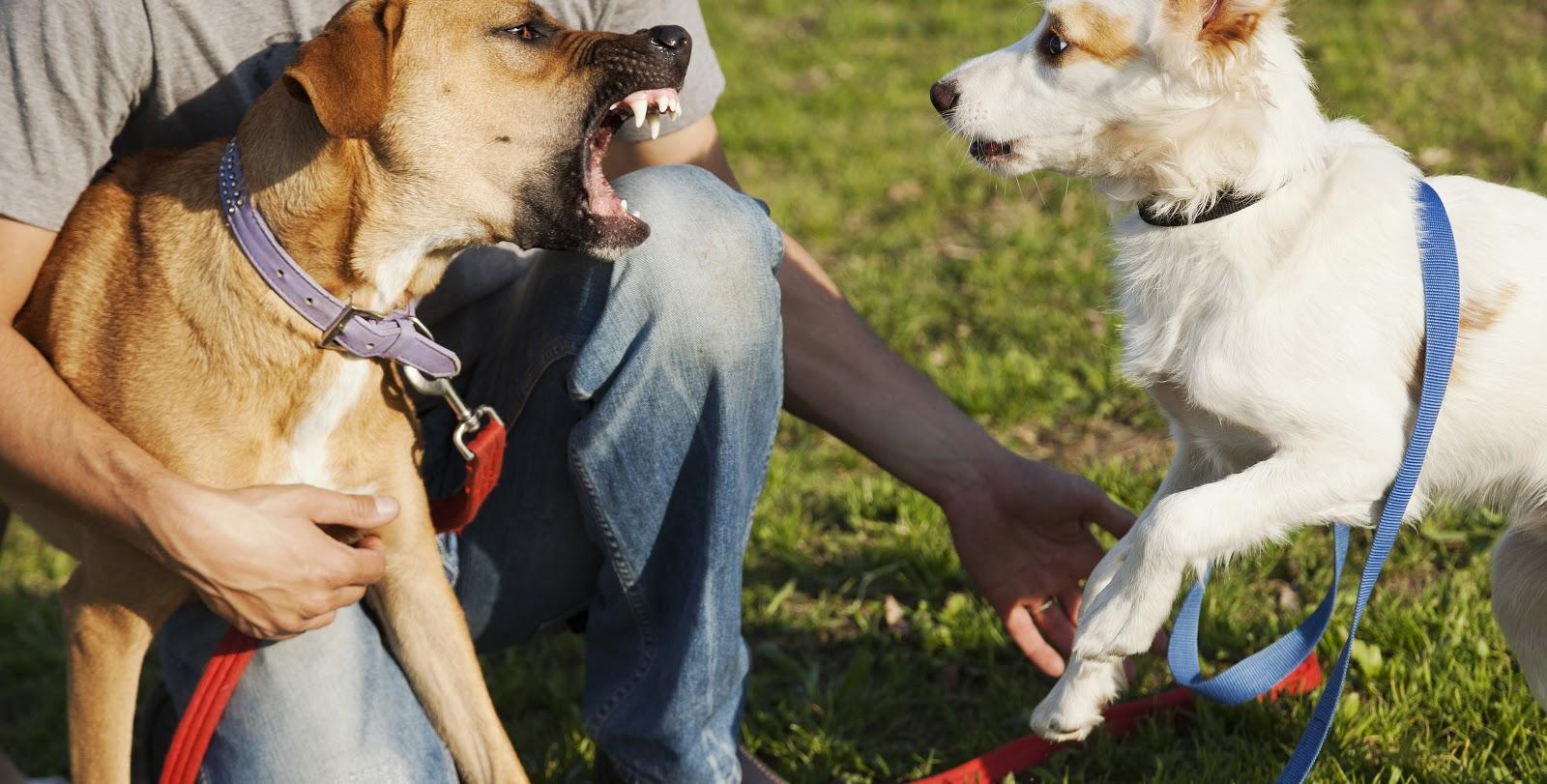 Dogs are man's best friend but if untrained or inherently vicious can be a danger to you and your loved ones.