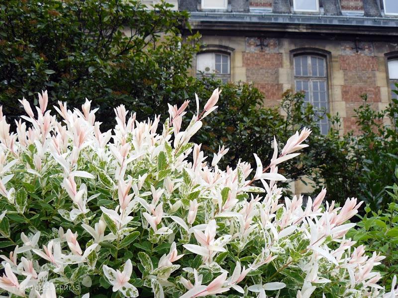 Le jardin botanique frenchies in paris for Jardin botanique paris