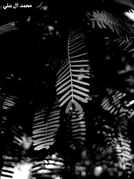 leafsoflight