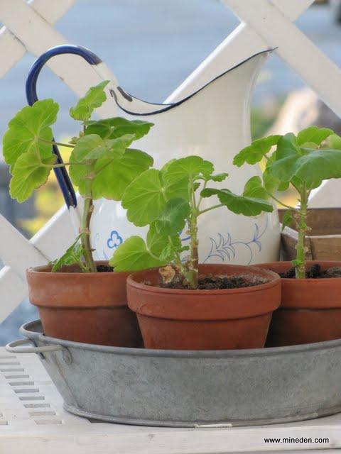 Kuber från Zengrow:s planteringsskiva