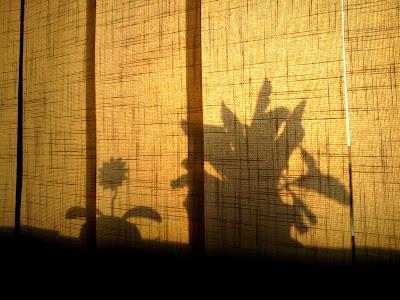 Flori la fereastra. Floare dansatoare cu incarcare energie solara