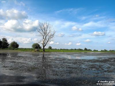 peisaj din Delta Dunarii