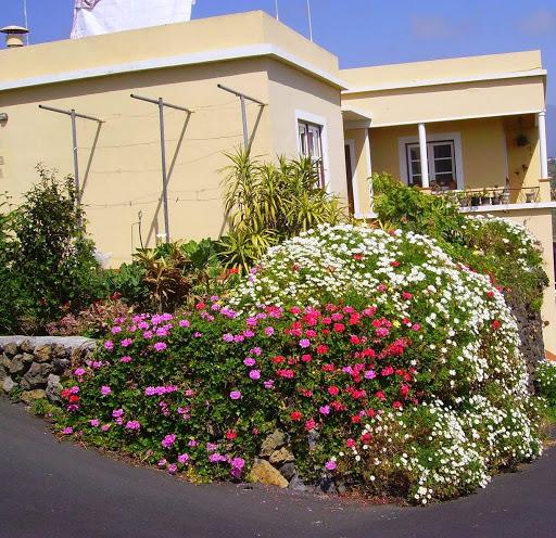 Frühling auf La Palma,Kanaren,